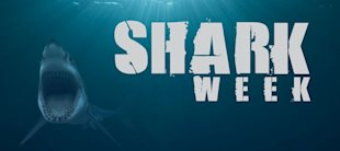 Social Media Buzz On Shark Week Generates Mixed Reviews image Shark Week
