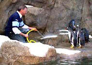 Dr. Clément Lanthier, the CEO of the Calgary Zoo, hoses down the penguin enclosure Monday.