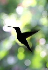 Why Googles Hummingbird Update is Awesome For Your Small Business image google hummingbird seo