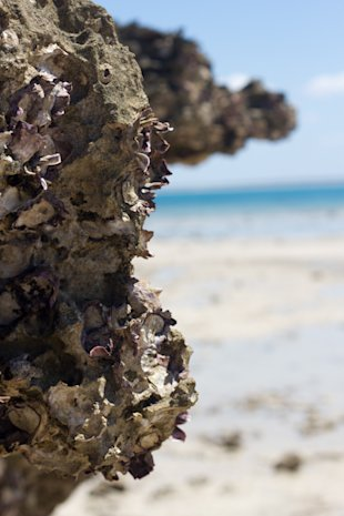 Santa Carolina, Mozambique, flora, shells, beach, Alasdair McCulloch