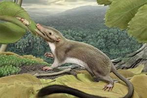 Little Bitty Ancient Mammal Unearthed in Japan