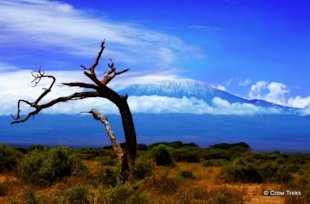 Extreme Customer Service on Top of Mt Kilimanjaro image climbing the customer centric mountain