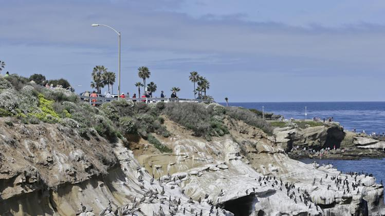 Tourists walk along the top of the cliffs  above the massive bird gathering on the cove in the La Jolla section of San Diego, Tuesday, April 2, 2013.  The birds have turned the cliffs white with their droppings and caused a stench in the area that draws tourist to restaurants and hotels.  (APPhoto/Lenny Ignelzi)