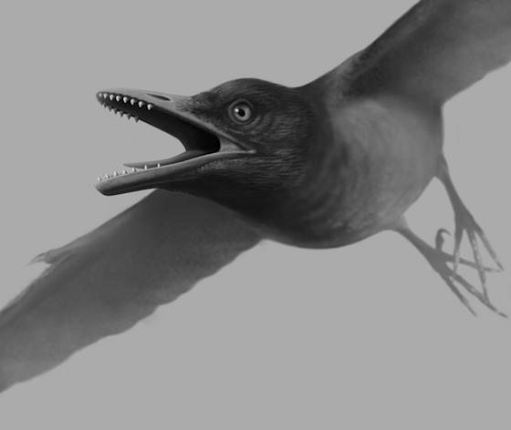 A fossil skeleton of a toothed bird has been unearthed in China. The Cretaceous Era bird had specialized teeth for cracking open hard foods such as insects or snails.