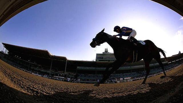 Horse Racing - Tipping Column: Hawkes Point due a grand run in National trial
