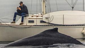 Man Misses Whale 2 Feet Away Because He Was Glued to …