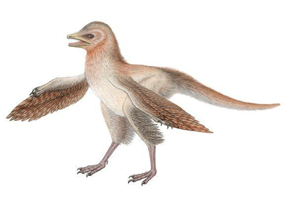 Reconstruction of Eosinopteryx brevipenna, a new theropod dinosaur with reduced plumage from the Middle/Late Jurassic of north-eastern China