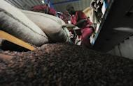 An employee at a cocoa export company in Ivory Coast empties cocoa sacks in a packaging factory at the port in Abidjan in October 2012. Ivory Coast on Tuesday hosts world players in the cocoa business for a conference on how to face up to the challenges posed by soaring demand.