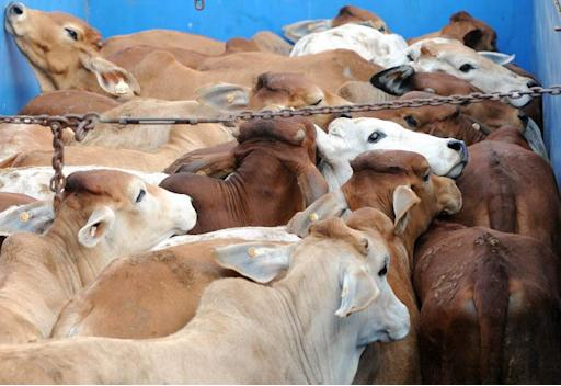 One million Australian cattle will be shipped to China annually in a deal that will double the size of the live export industry, officials say