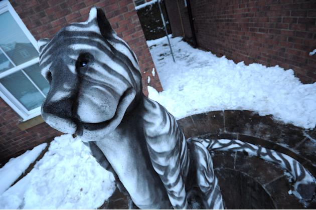 Carl Prewitt's snow sculpture, a tiger complete with stripes (SWNS)
