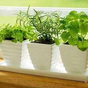 Stir up memories of warmer months by growing fresh herbs inside your home.