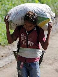 A boy carries a sack of coffee beans during harvest in the El Paraiso, 110 kms east of Tegucigalpa, Honduras, on Januray 17, 2013