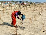 A female Indian labourer pours water on a sapling as she tends to trees in Nagapattinam, on January 23, 2005. Fierce competition for water could trigger conflict unless nations cooperate to share the diminishing resource, leaders from Asia-Pacific nations have warned