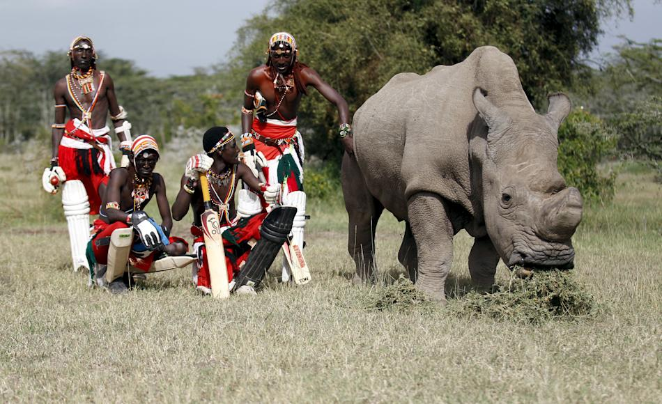 Members of the Maasai Cricket Warriors pose for a photohraph with the last surviving male northern white rhino named  'Sudan' after playing against the British Army Training Unit at the Ol Pej