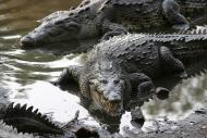 Man Killed By Crocodile in Philippines