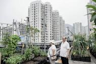 A man and woman look at growing vegetables at City Farm, an organic farm set up on the rooftop of a tower block in Hong Kong. Official figures suggest organic food is becoming increasingly popular in the city, with the number of farms taking part in a government-run scheme to encourage organic agriculture rising to 193 in June this year, from 123 in 2008