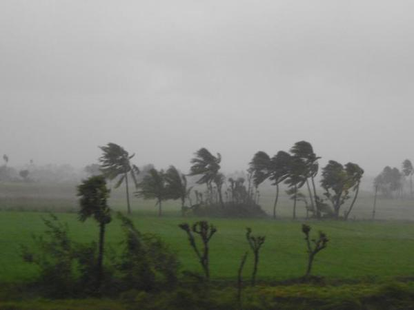 Cyclone Thane rages through Salem, Tamil Nadu