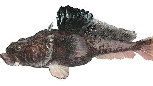 New Deep-Sea Fish Species Found in Antarctica