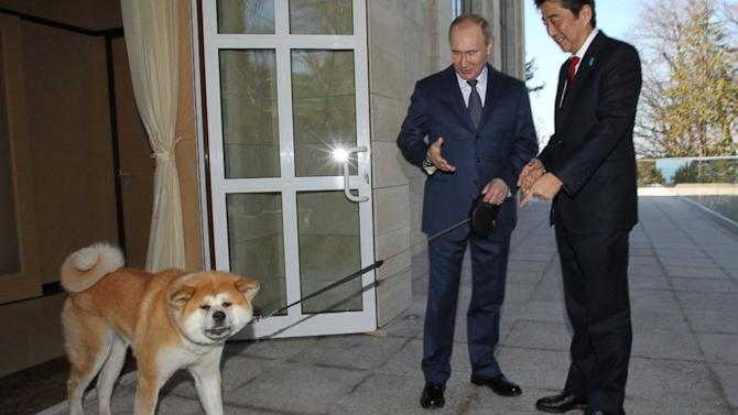 Amid Uproar Over Stray Cull, Putin Brought His Own Dog to Sochi