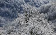 A snow-covered tree is seen during the 2014 Sochi Winter Olympics in Rosa Khutor February 19, 2014. REUTERS/Stefano Rellandini