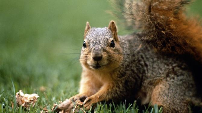 Plague-Infected Squirrel Closes California Campground