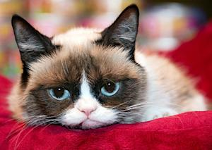 Grumpy Cat to Star in Lifetime Holiday TV Movie Titled Grumpy Cat's Worst Christmas Ever