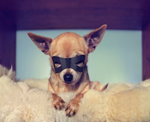 4 Content Marketing Strategies Inspired by Summer Blockbusters image chihuahua