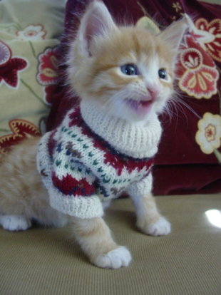 These 26 Cats Wearing Christmas Sweaters Will Put A Smile On Your Face image Kitten In Christmas Sweater 449x600