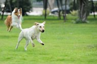 Follow these 10 tips for a fun and safe time at the dog park.
