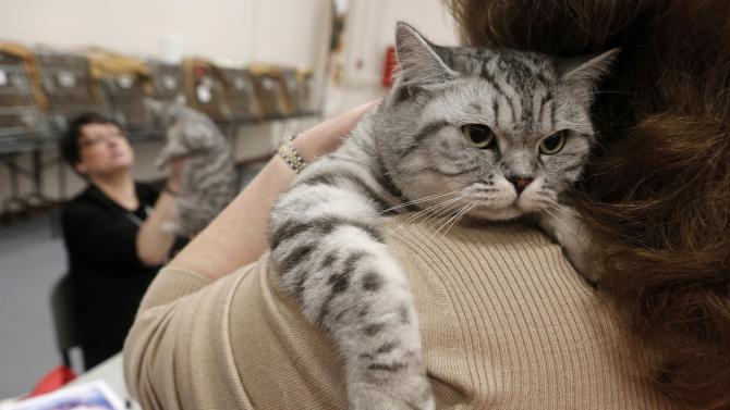 A woman holds her British shorthair cat as she waits in front of a judge during the Athens 21st International Cat Show