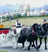 Horse Drawn Carriage Co, Inc.
