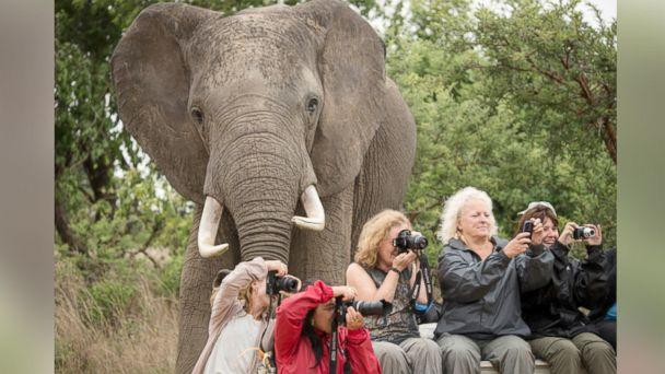 Is This the Best Animal Photobomb Ever?