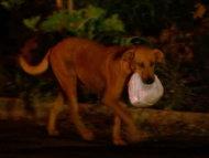 Anjing Ini Lakukan Perjalanan 4 KM Setiap Malam Demi Beri Makan Teman-temannya