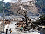 Two women walk though cherry blossom hanging over tsunami damage in Otsuchi, Iwate prefecture, on April 18, 2011. Domestic violence in Japan's tsunami and atomic disaster zone has risen dramatically, according to a report released on International Women's Day