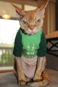 These 26 Cats Wearing Christmas Sweaters Will Put A Smile On Your Face image Cat In Reindeer Christmas Sweater