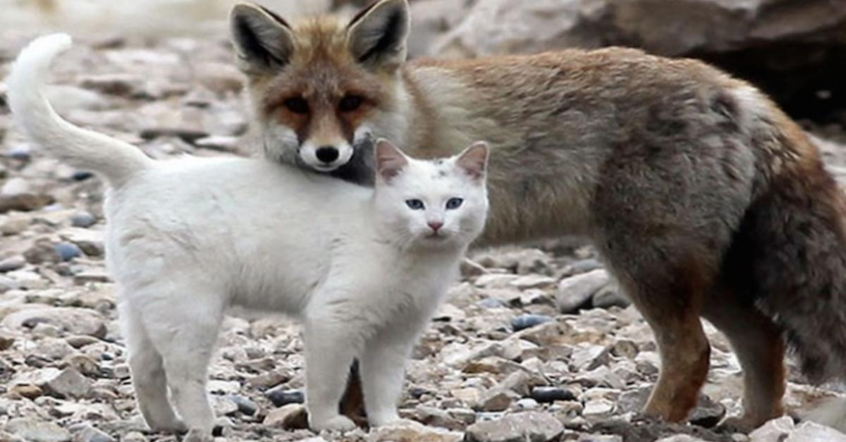 17 Unlikely Animal Friendships You Need To See
