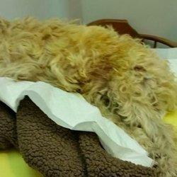 Henry The Dog Was Allegedly Left For 7 Days In A Cage With A Broken Back. Here's His Second Chance.