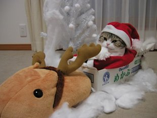 10 Animals Who Refuse To Get Into The Christmas Spirit image Cute Christmas Animals 53.jpg