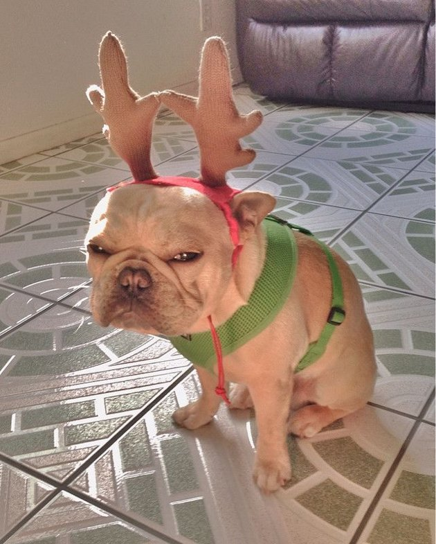 10 Animals Who Refuse To Get Into The Christmas Spirit image dog.jpg
