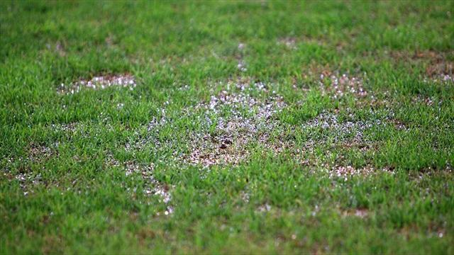 Football - Bees stung by wet weather