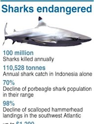 Graphic on endangered shark species. A conservation victory restricting global trade in more shark species will take a fresh bite at Hong Kong's market in fins