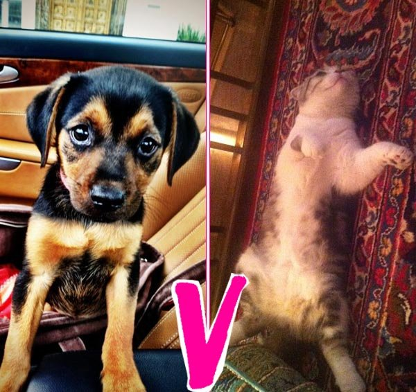 Miley Cyrus' Dog V. Taylor Swift's Cat: Who Has The Cuter Pet?