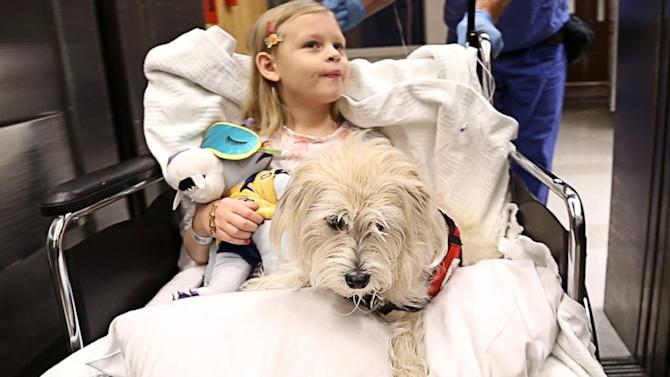Lifesaving Service Dog Sniffs Out Girl's Disease, Even in Operating Room