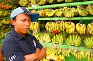 Coining it: The sellers enjoy good profits due to higher demand for bananas during the weeks before Galungan. (