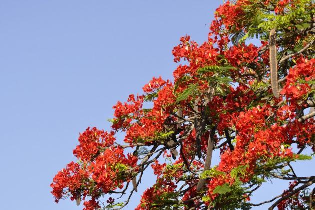 Trees of Bangalore