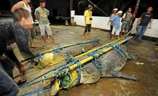 Huge crocs!