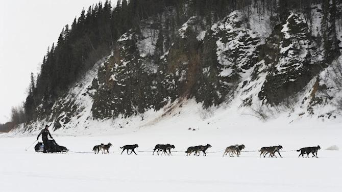 Musher Ken Anderson drives his team up the Yukon River as he nears the Iditarod checkpoint in  Anvik, Alaska on Friday, March 8, 2013,  during the Iditarod Trail Sled Dog Race. (AP Photo/Anchorage Daily News, Bill Roth)