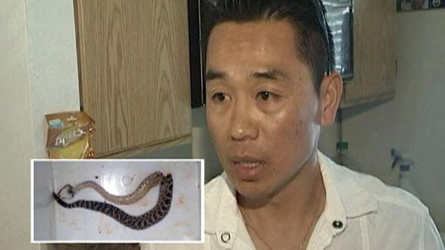 California Man Bitten By Rattlesnake, Strikes Back With Golf Club