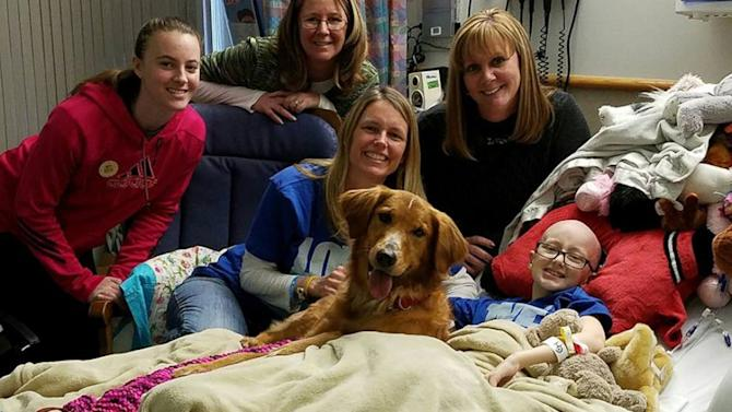 Girl battling cancer granted wish of seeing 'A Dog's Purpose,' gets visit from dog in film
