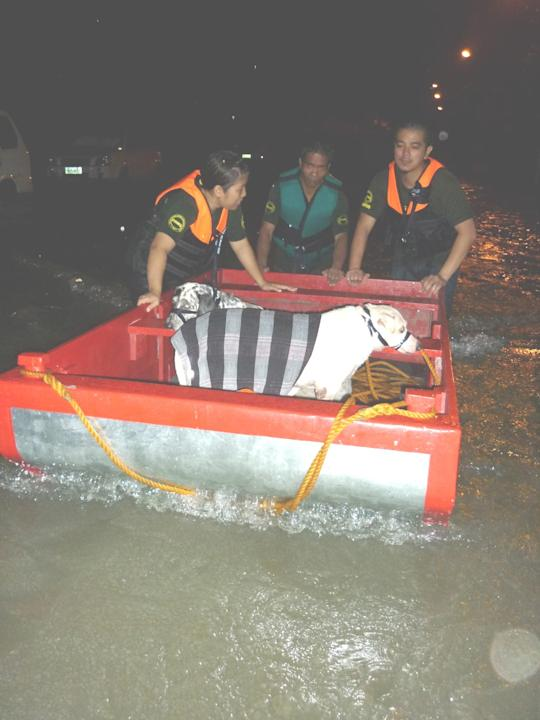PAWS rescuers were able to borrow a wooden boat to transport the rescued dogs.